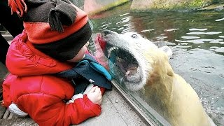 Zoo Animal Attacks ★ When Dangerous Animals Don