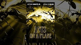 Ants On A Plane