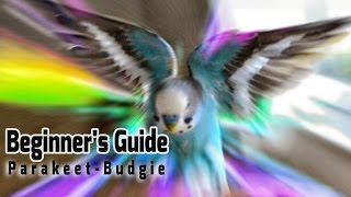 How to take Care of a Parakeet   Budgie [Beginner's Guide to Pet Birds]