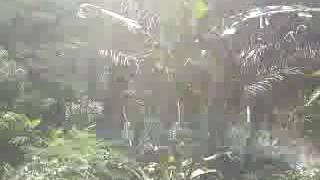 Pasangan mesum di hutan dan ml di rekam