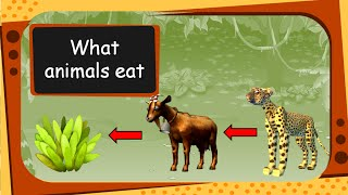 Science - What Animals Eat (For children) - English