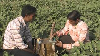 NPK fertilizer spray in brinjal crop