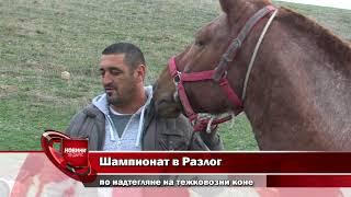 Шампионат в Разлог по надтегляне на тежковозни коне