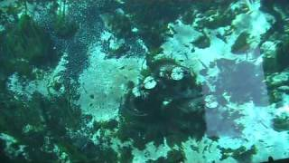 World Famous Glass Bottom Boat tours at Silver Springs Florida (part 2)