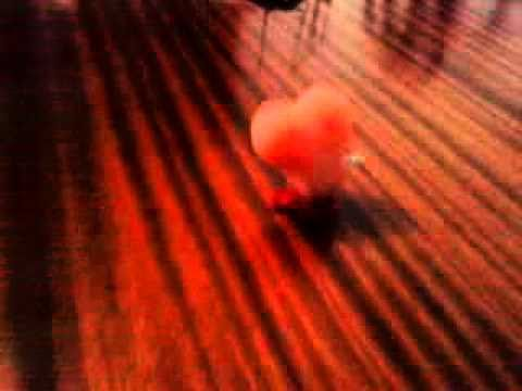 Xxx Mp4 Baile De Las Tetas 3gp Sex