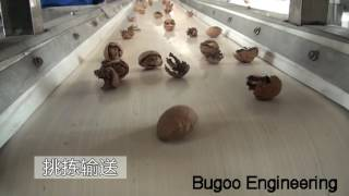 Walnut processing