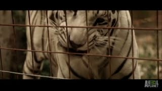 Animals Take Over Ohio Town | Fatal Attractions