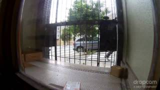Download USPS Postal Package Theft: Mail Thief on Castro Street San Francisco 3Gp Mp4