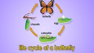 Life Cycle Of A Butterfly | Metamorphosis | Metamorphosis Song | Jack Hartmann