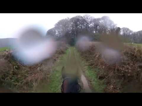 Xxx Mp4 Woah Shamrock Retired Race Horse Bolts And Unseats Rider 3gp Sex