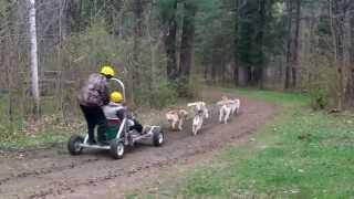 How we use to dog cart (2011) Communication Fail