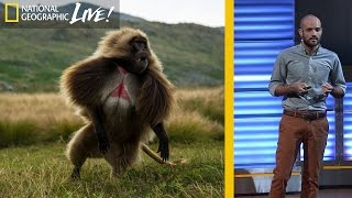 The Fascinating Lives of Bleeding Heart Monkeys (Part 2) | Nat Geo Live