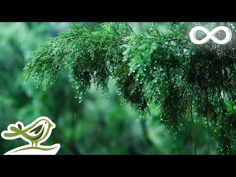 Relaxing Music & Soft Rain Sounds Beautiful Piano Music for Sleeping Studying & Relaxing
