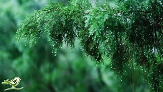 Relaxing Music & Soft Rain Sounds - Beautiful Piano Music for Sleeping, Studying & Relaxing