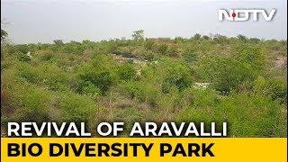 Revival Of Aravalli Bio Diversity Park In Gurugram