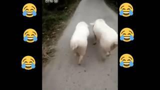 Watsapp Video || Facebook || Insta || Twitter || Funny Videos