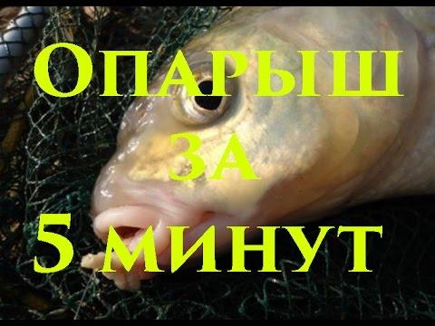 Вырастить опарыша для рыбалки в домашних условиях
