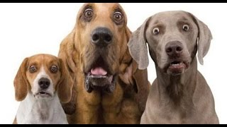 funny dog video ever ►Funny Animal Videos ►When crazy Dogs