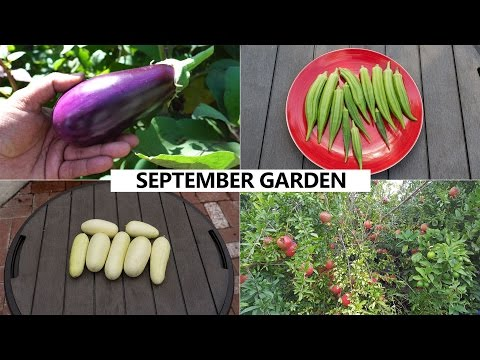 Xxx Mp4 The California Garden In September Harvests Fall Planting Guide 3gp Sex