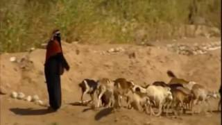 أبوبكر سالم في أغنية المغترب يا ويح نفسي مع فيديو سياحي عن اليمن