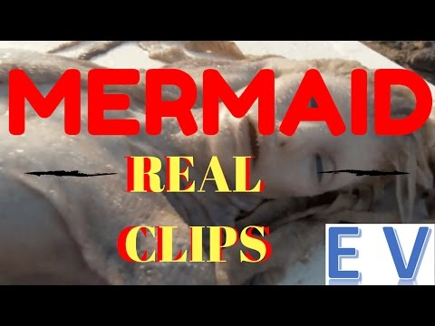 Top 10 REAL Clips Of Real Mermaid | Entertaining Videos