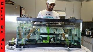 4 TANKS IN ONE! Modern Aquarium DIY Tankception!