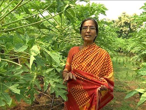 Woman Farmer Nagalaxmi  Success Story - Agriculture Special    Bhoomi Putrika    Vanitha TV   