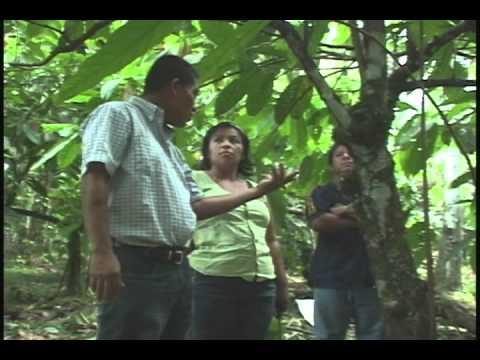 Reproduccion Sexual del Cacao