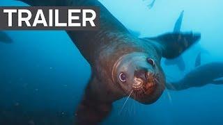 Blue Planet II Trailer 2 - BBC Earth