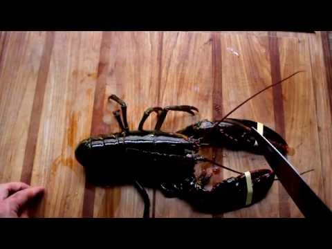 How to kill a lobster quickly
