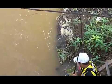 A pesca do robalo gigante