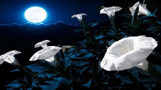 Santana - Flor De Luna (Moonflower) [Audio HQ]