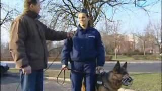 Kántor utódai -- új négylábúak segítik a rendőrök munkáját Tiszaújvárosban!