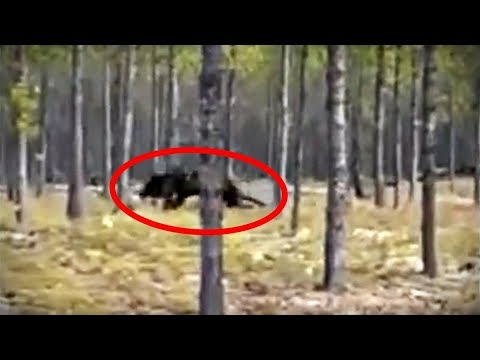 5 Mysterious Cryptid Videos You ve Never Seen