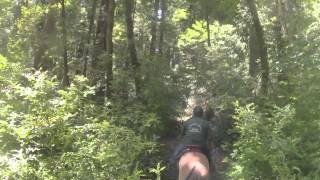 Pescadero Park & Jack Brook Horse Camp