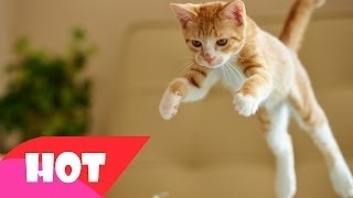 Funny Cat Videos   Funny Cat   Funny Cats And Dogs   Funy Cat Dancing To Music   Funny Cat 2015   #