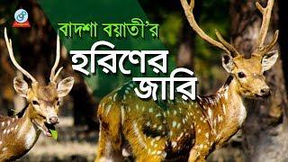 Badshah Boyati - Horiner Jari | হরিণের জারি | Baul Gaan | Jari Gaan | Sangeeta