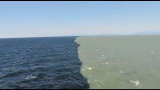 2 महासागर यहाँ मिलते हैं पर घुलते नहीं - Gulf Of Alaska Scientifically Explained - TEF Ep 20