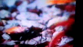 فيلم عن العنكبوت و النمله الطائره الكبيره