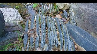 Slaty bedrock, the natural gold trap