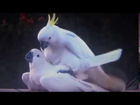 Xxx Mp4 Lovebirds 3gp Sex