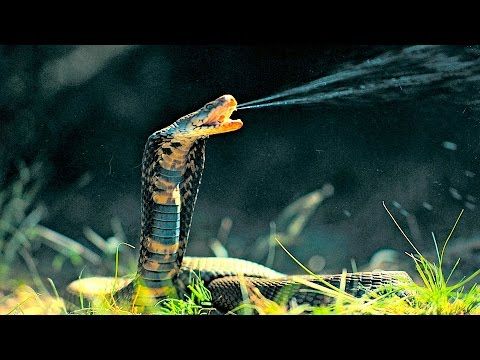 Xxx Mp4 Top 10 Most Venomous Snakes In The World 3gp Sex