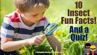 Insects for Children Video Science Bugs Teaching Lesson for Kids Elementary Grades