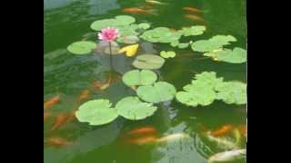Yao Beina (Bella Yao) – Picking Lotus   2013  姚貝娜 - 採蓮