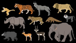Indian Mammals - Animals Series - Elephant, Tiger, Bear - The Kids