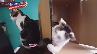 Cats Being Jerks #2 Compilation 2018 | Try Not To Laugh