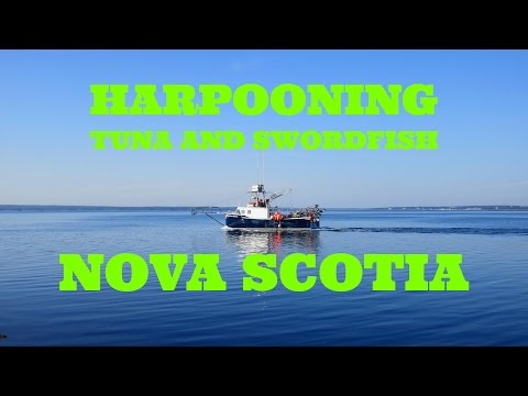 Tuna Swordfish Harpoon Fishing