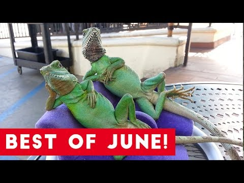 Funniest Pet Reactions & Bloopers of June 2017 | Funny Pet Videos