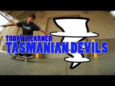 watch TODAY I LEARNED TASMANIAN DEVILS