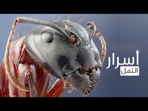سبحان الله تم اكتشاف اقدم نملة بالعالم عمرها 92 مليون عام..؟!